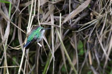 colibri 02